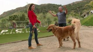 Staffel 3 Episode 2: Adoptierter Retriever