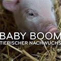 Baby Boom - Tierischer Nachwuchs