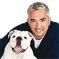 Cesar Millan - Der Hundeflüsterer
