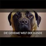Die Geheime Welt Der Hunde