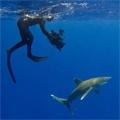 Wie 'Der weiße Hai' die Welt veränderte