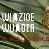 Winzige Wunder: Insekten